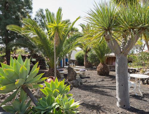 Unser Palmengarten